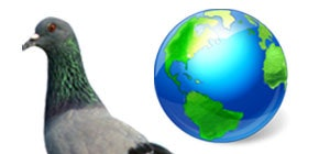 Pigeon update launches outside US